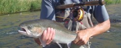 lower river steelhead
